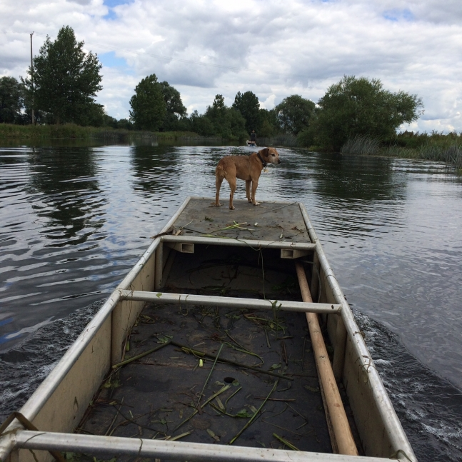 molly on punt